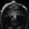Portret użytkownika kwasior500